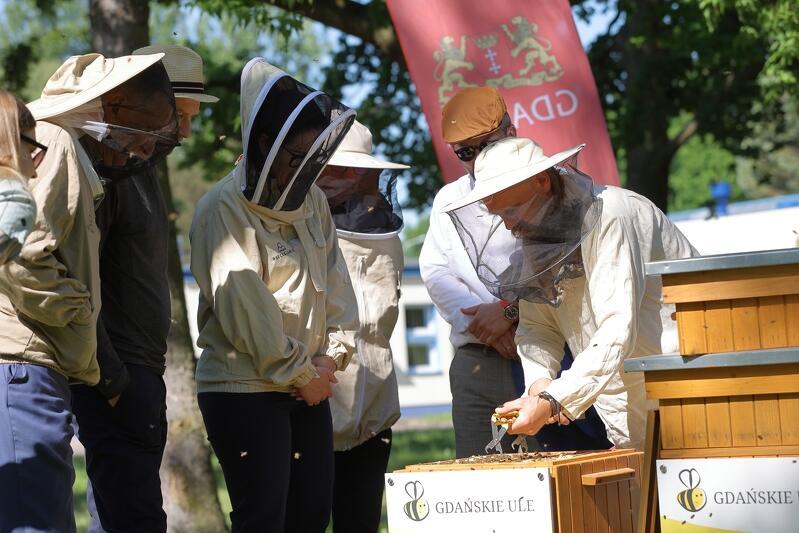Prezydent Gdańska Aleksandra Dulkiewicz ubrana w strój pszczelarza zagląda do jednego z gdańskich uli