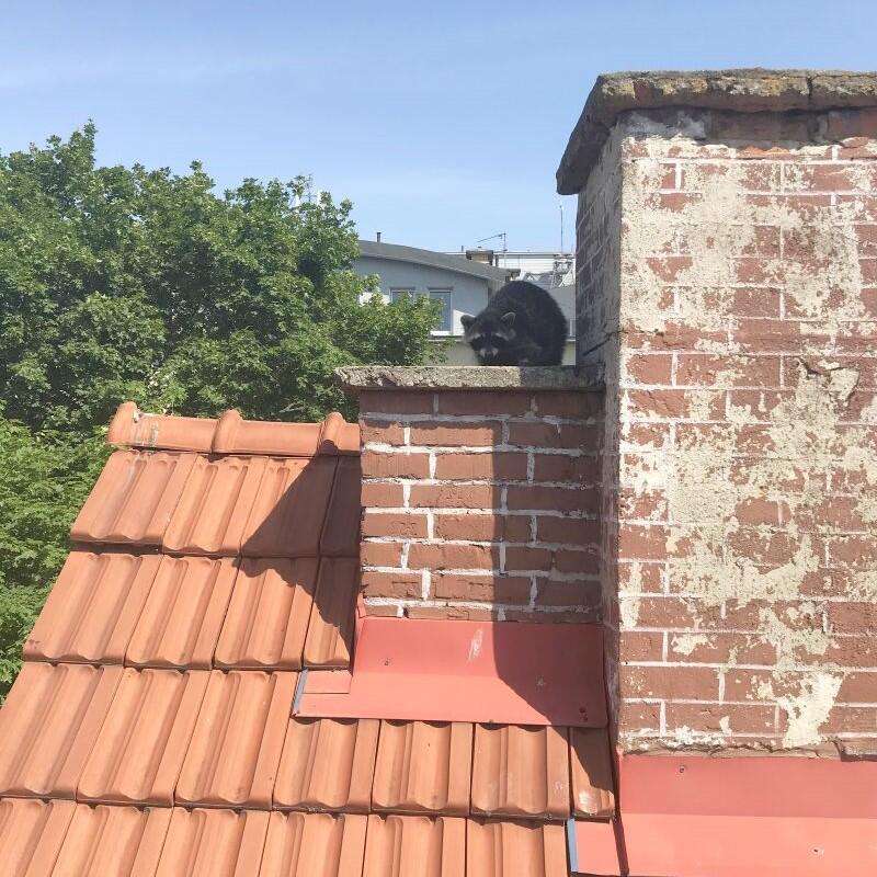 To samo zdjęcie, ale bez zbliżenia na panią szopową. Dom ma dwa piętra, a dach jest naprawdę wysoki. Co będzie, jeśli znowu na ziemię spadnie któryś z maluchów?