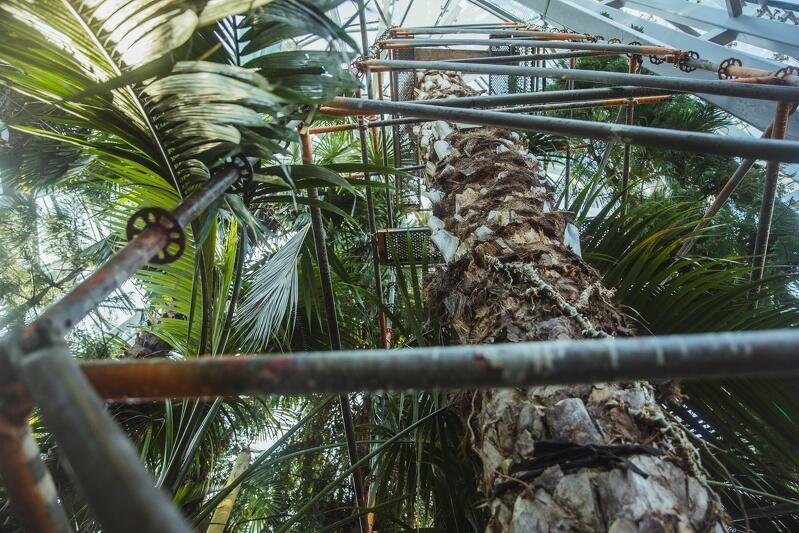 Palmiarnia i jej rośliny - zdjęcie z marca 2021 roku