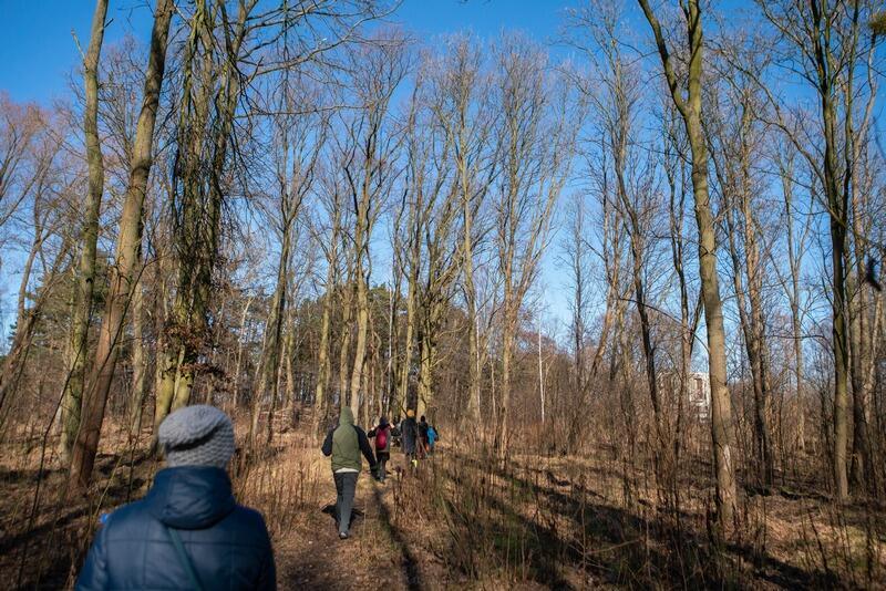 Las w Brzeźnie (zdjęcie ilustracyjne)