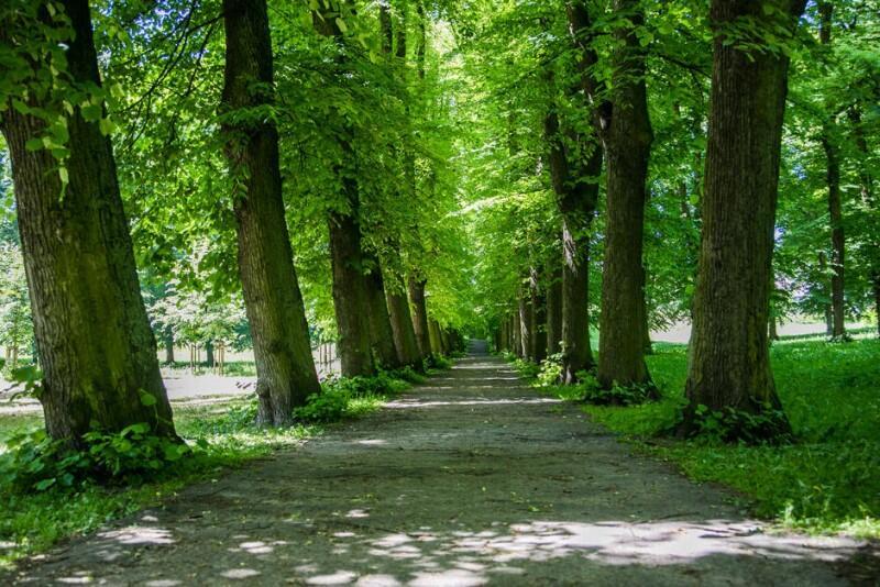 W GZDiZ planowane jest rozbudowanie zespołów pielęgnujących miejską zieleń, dlatego poszukiwani są nowi pracownicy