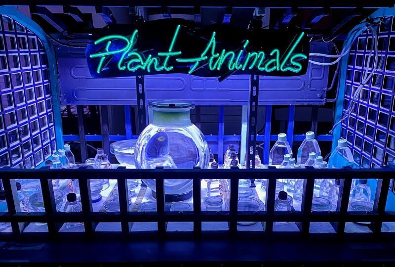 """Praca """"Roślino~Zwierzęta"""" Elvina Falmingo jest częścią długoletniego projektu artysty - """"Symbiotyczność tworzenia"""". W CSW Łaźnia 1 możemy ją obejrzeć od 10 do 12 września 2021 w godz. 14-20"""