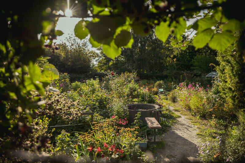 Teren dawnych ogrodów działkowych za budynkiem przychodni jest obecnie użytkowany bezumownie