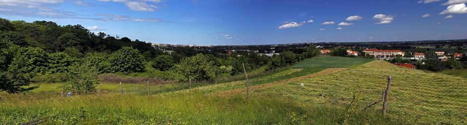 1p1_Panorama-1