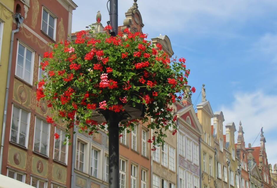 Dekoracje kwiatowe pojawią się na słupach latarni