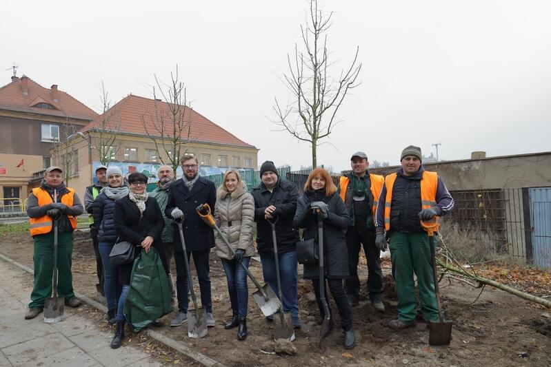 Nasadzenia drzew w Gdańsku