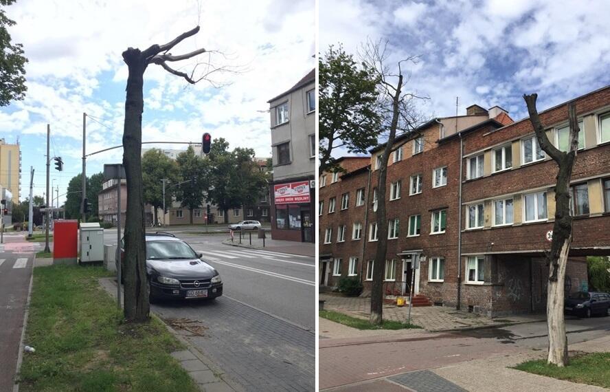 Martwe drzewa na ul. Kościuszki