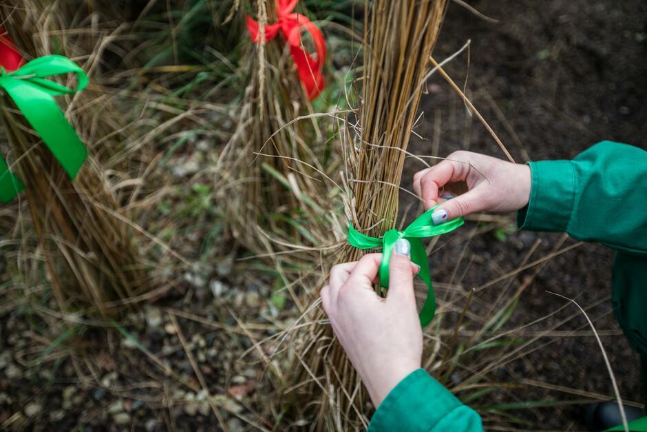 Na miejskich rabatach pojawią się ozdobne zielono-czerwone kokardy