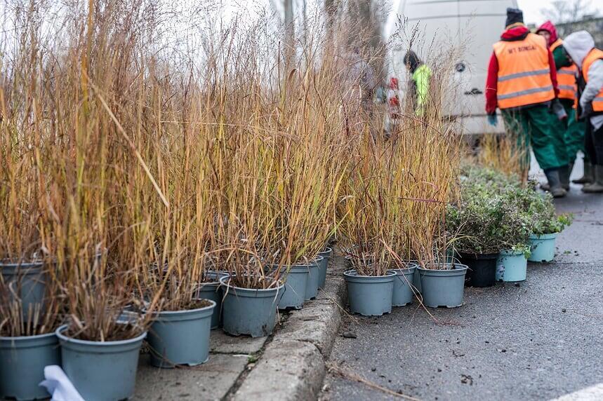 Na terenie Gdańska przybędzie blisko 14 tys. tych wieloletnich, odpornych na warunki atmosferyczne krzewów i bylin