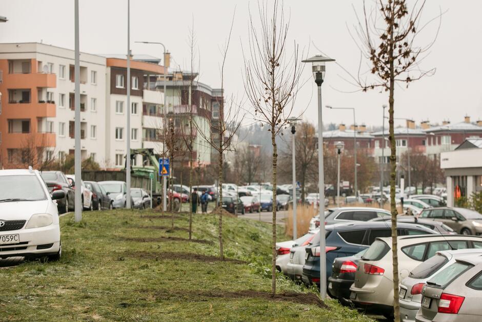 Do końca roku posadzimy 191 drzew oraz 14 tys. bylin i krzewów
