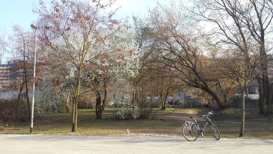 Skwer Kwitnących Wiśni to projekt, który zrealizowany zostanie w ramach Budżetu Obywatelskiego