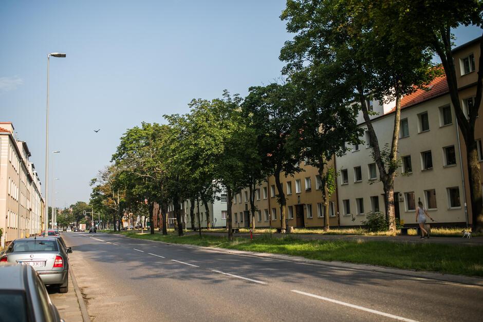Dla drzew przy ul. Kościuszki zaplanowane indywidualne zabiegi pielęgnacyjne