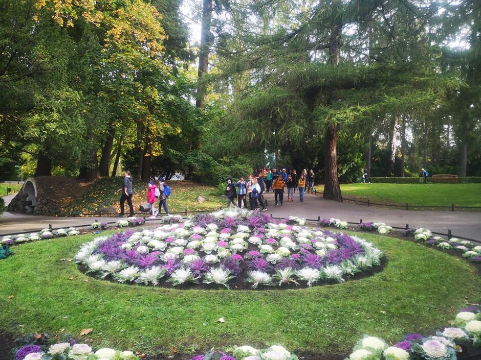 Jesienne nasadzenia na rabacie w Parku Oliwskim