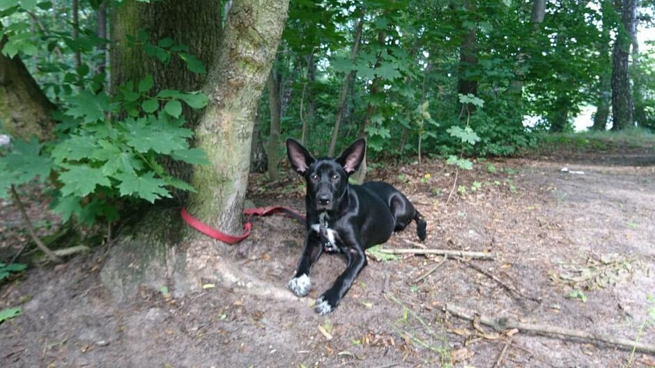 Pies przywiązany do drzewa 1200px