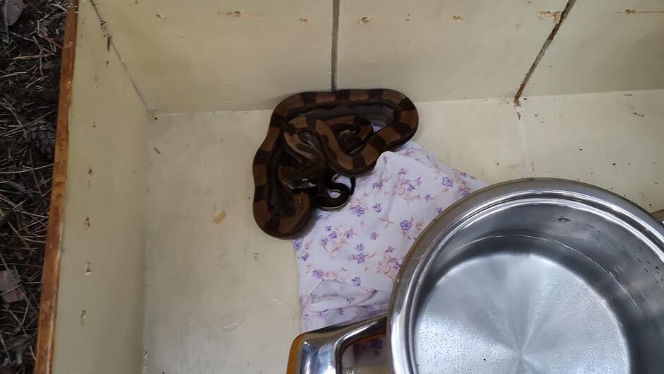 wąż camping Stogi3 1200px