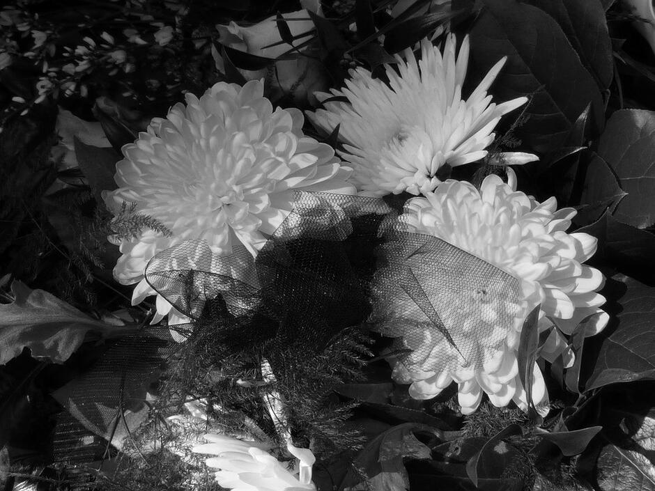 kwiaty convert 2