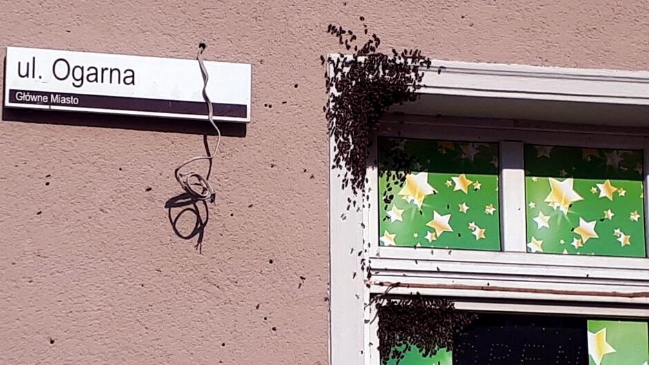 elewacja budynku fragment okna rój pszczół