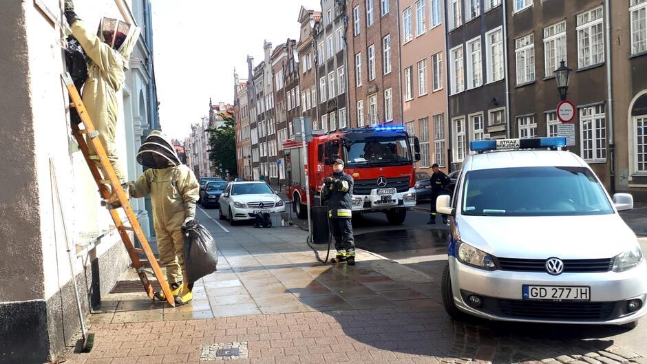 drabina strażacy ulica pszczoły radiowozy
