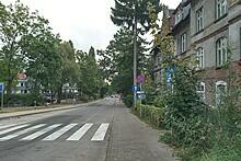 kamienica przejście dla pieszych drzewa ulica