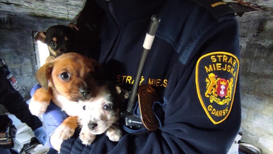 szczeniaki strażnik ręka policjanta wnętrze budynku