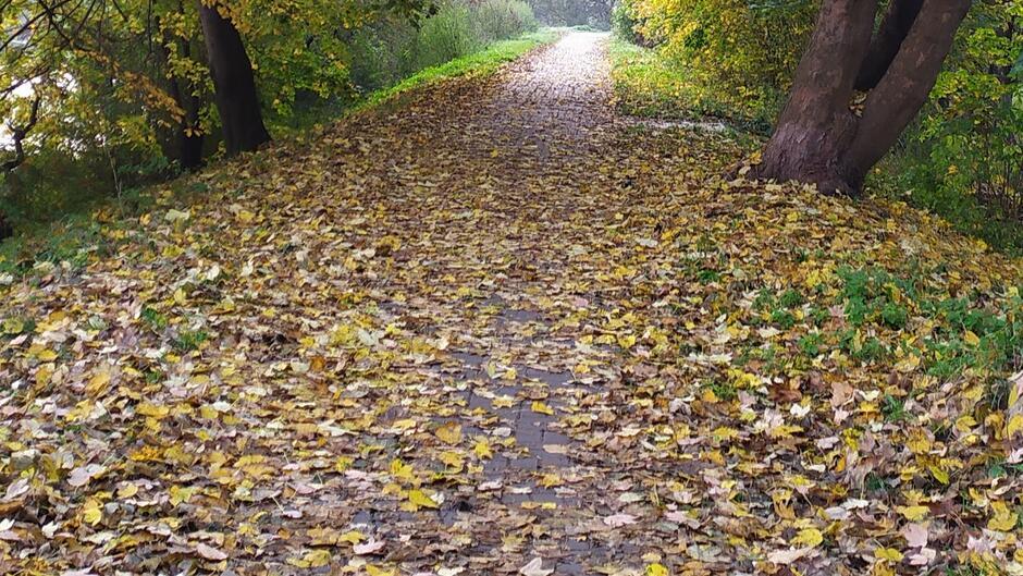 liście chodnik, alejka