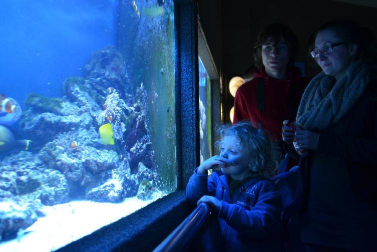 Gdynia Aquarium