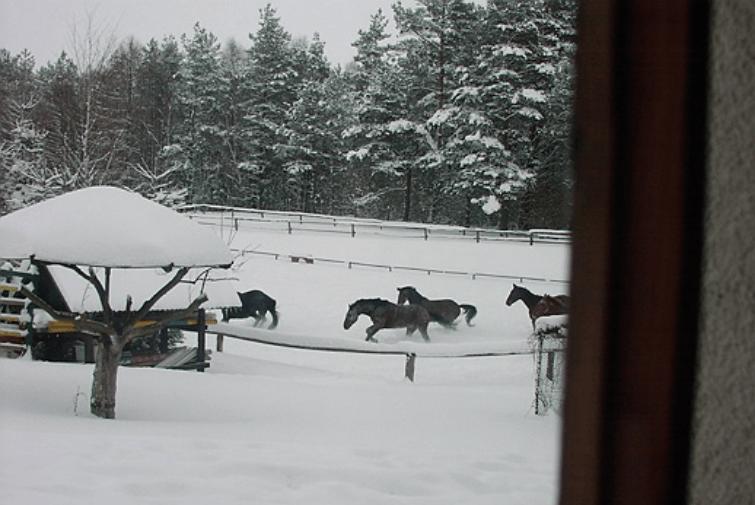 Konie w Ośrodku Tabun