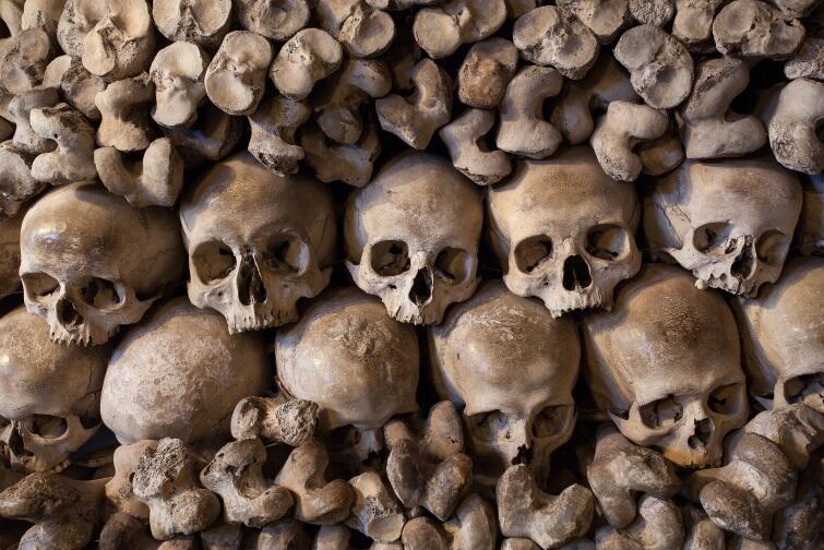 Stosy kości odnalezione w bazylice św. Brygidy w Gdańsku