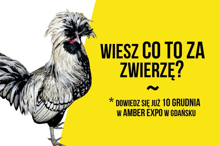 Zobacz wystawę wyjątkowych zwierząt w AMBEREXPO – 10-11 grudnia