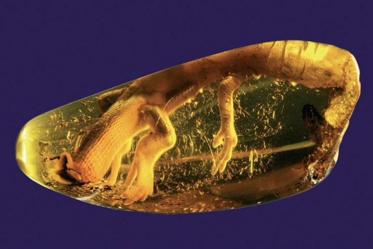 zdjęcie przedstawia jaszczurkę uwięzioną miliony lat temu w bryle bursztynu